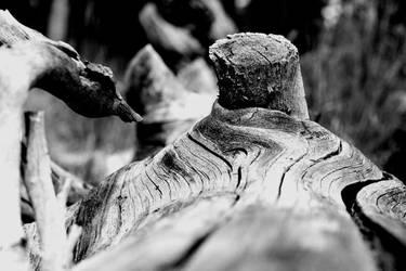 Wood? Knot.
