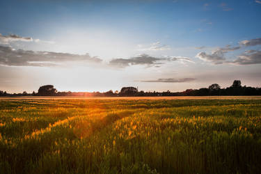 Sunset in the field by WeitkampPhotography