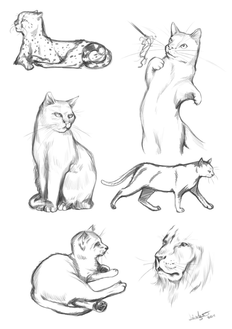 Feline Study II by Thilil on DeviantArt