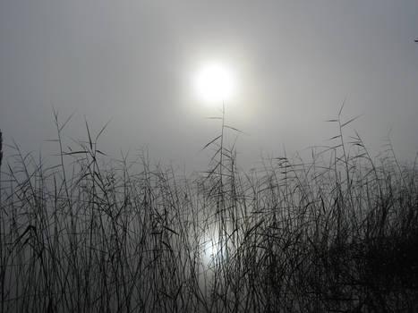 Misty Morning, pt 3
