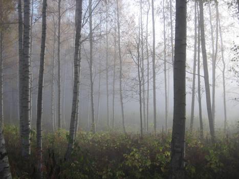 Misty Morning, pt 4