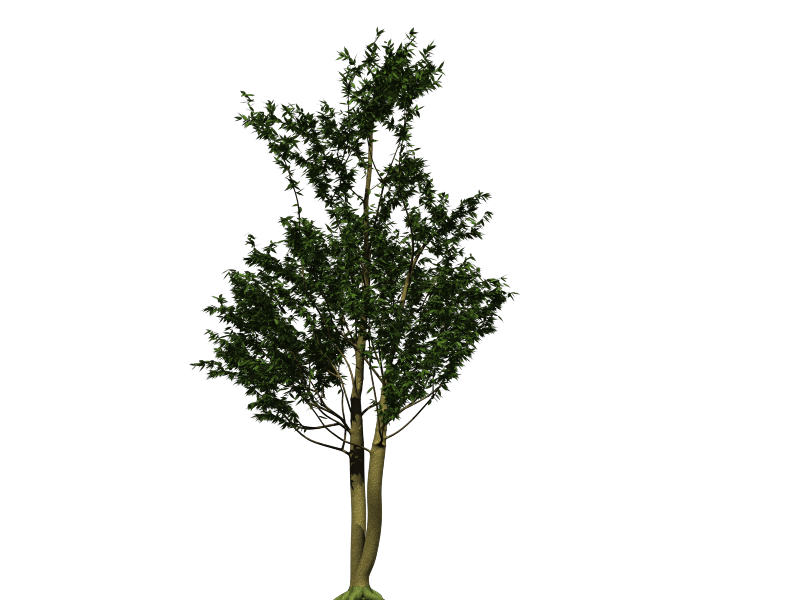3D Arbol tipo Zapote blanco by equisce on DeviantArt