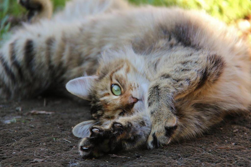 Stretch! by xxStarpelt