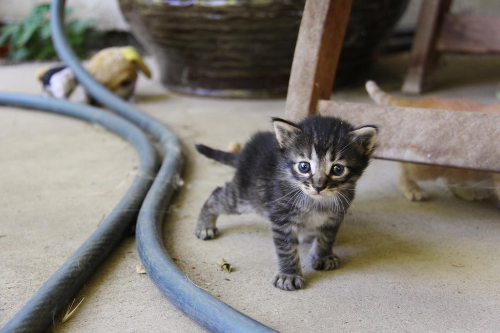 Kittens by xxStarpelt