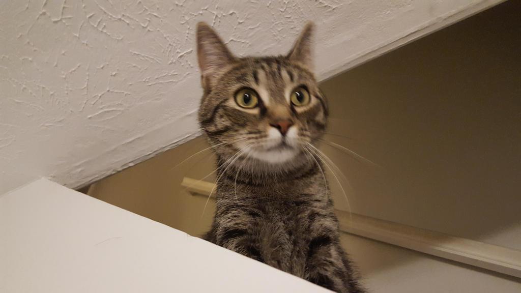 Cat lurking by eternal1990