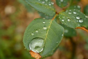 Droplets 3 by Elvenred