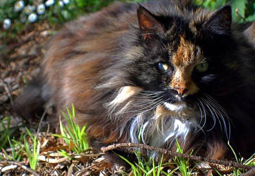 Rosie in the Garden
