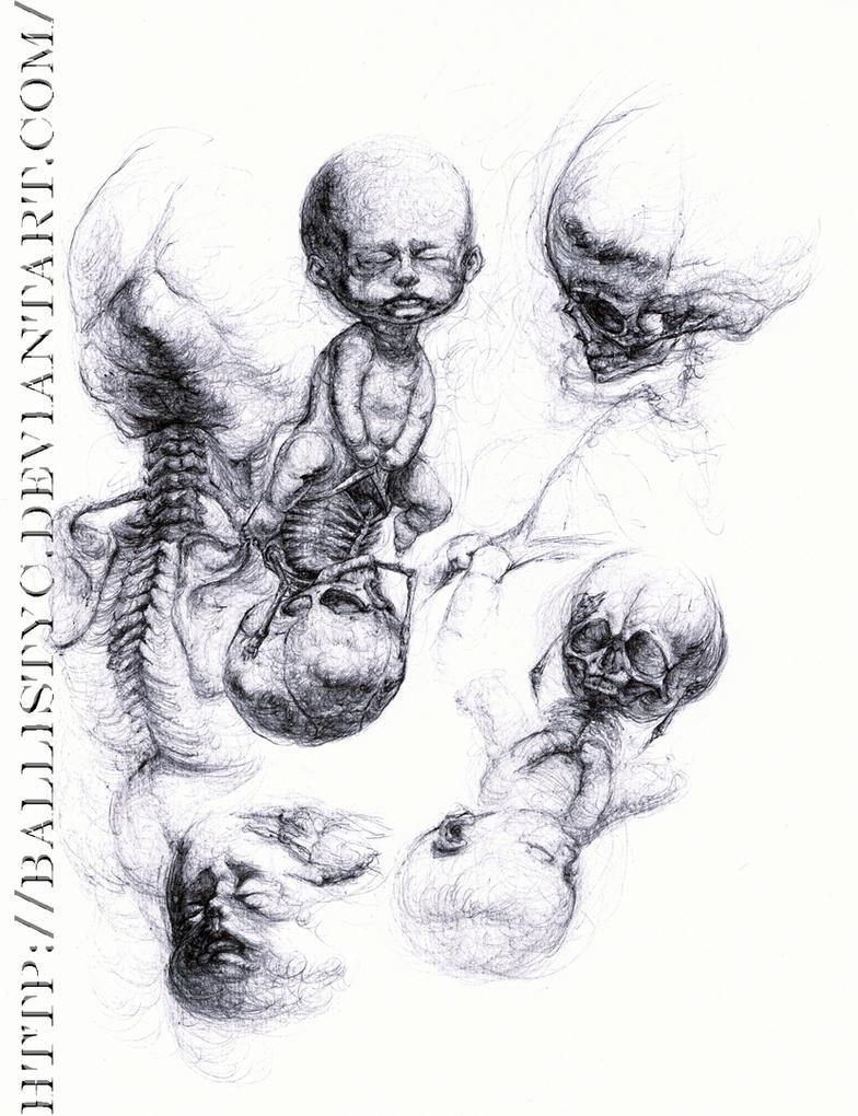 Anatomy of a Fetus by Ballistyc on DeviantArt