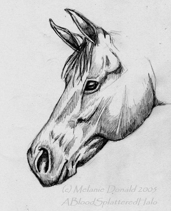 Horse Head Sketch - Rough By ABloodSplatteredHalo On ...