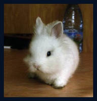 killer rabbit by ZiB