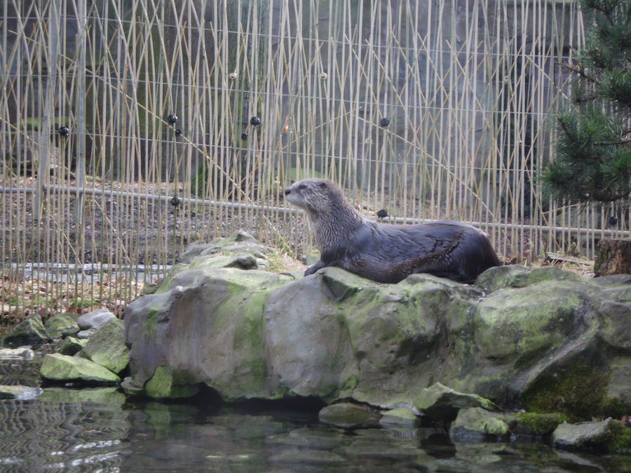 European Otter by JollyStock