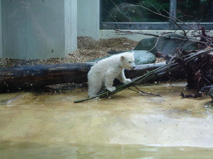 Polar Bear Cub by JollyStock