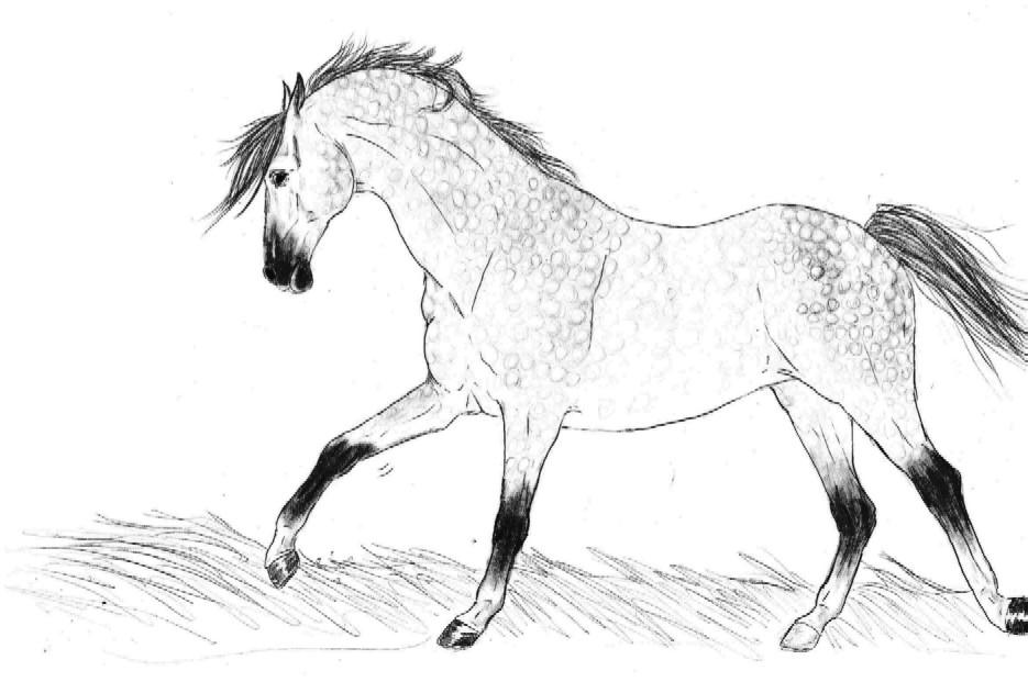 dapple grey andalusian mare by hackney on deviantart