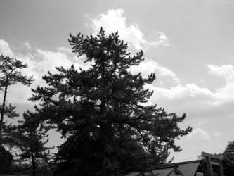 Ise trees by BunnyUsagi
