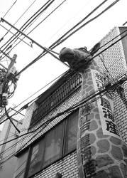 Giraffe in the city by BunnyUsagi
