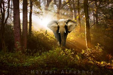 Elephant by Hayderalfakhry