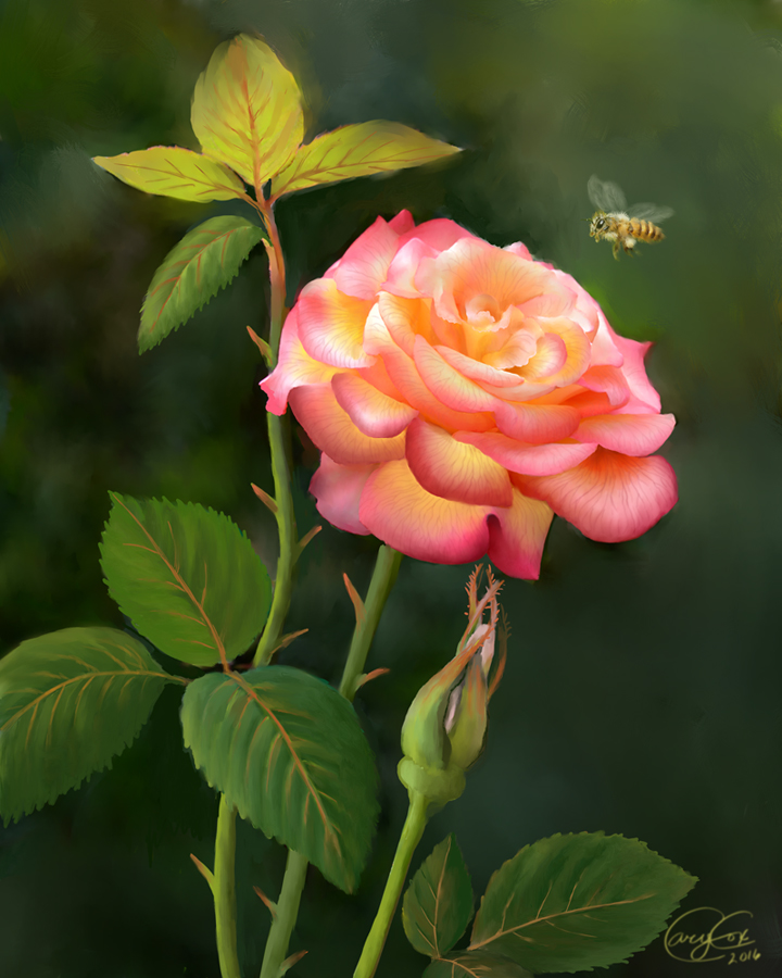 Peace Rose, Portland Rose Garden by Brightstone