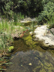 Creek Stock [1] by ThePix
