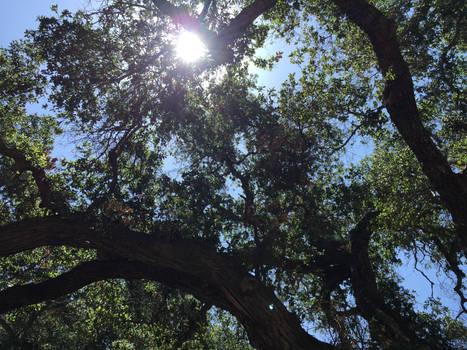 Sunlight In Trees [2]