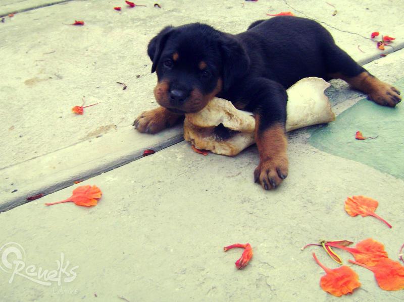 u love me? by Reneks