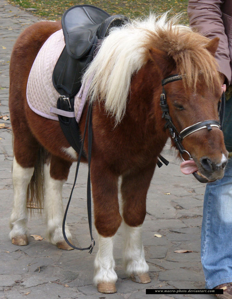 Pony 1 by macro-photo