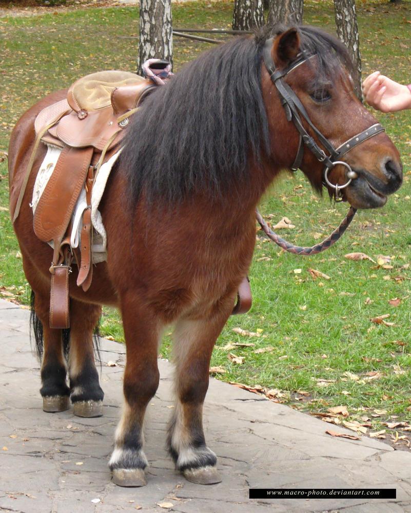 Pony 2 by macro-photo