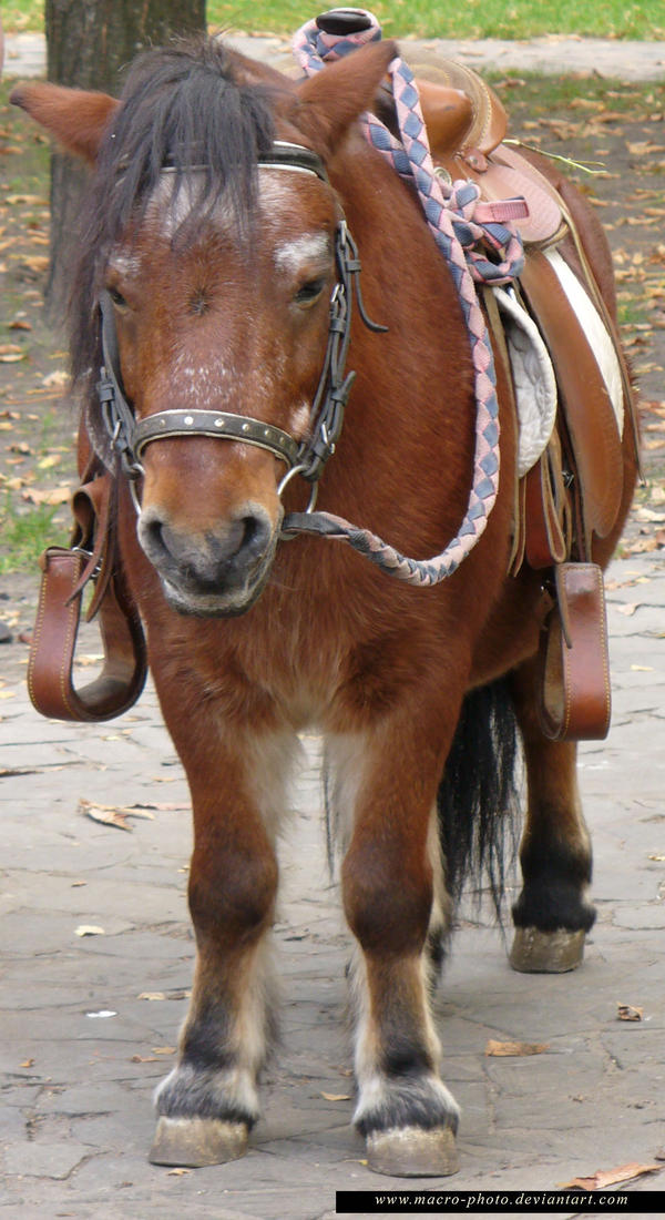 Pony 3 by macro-photo