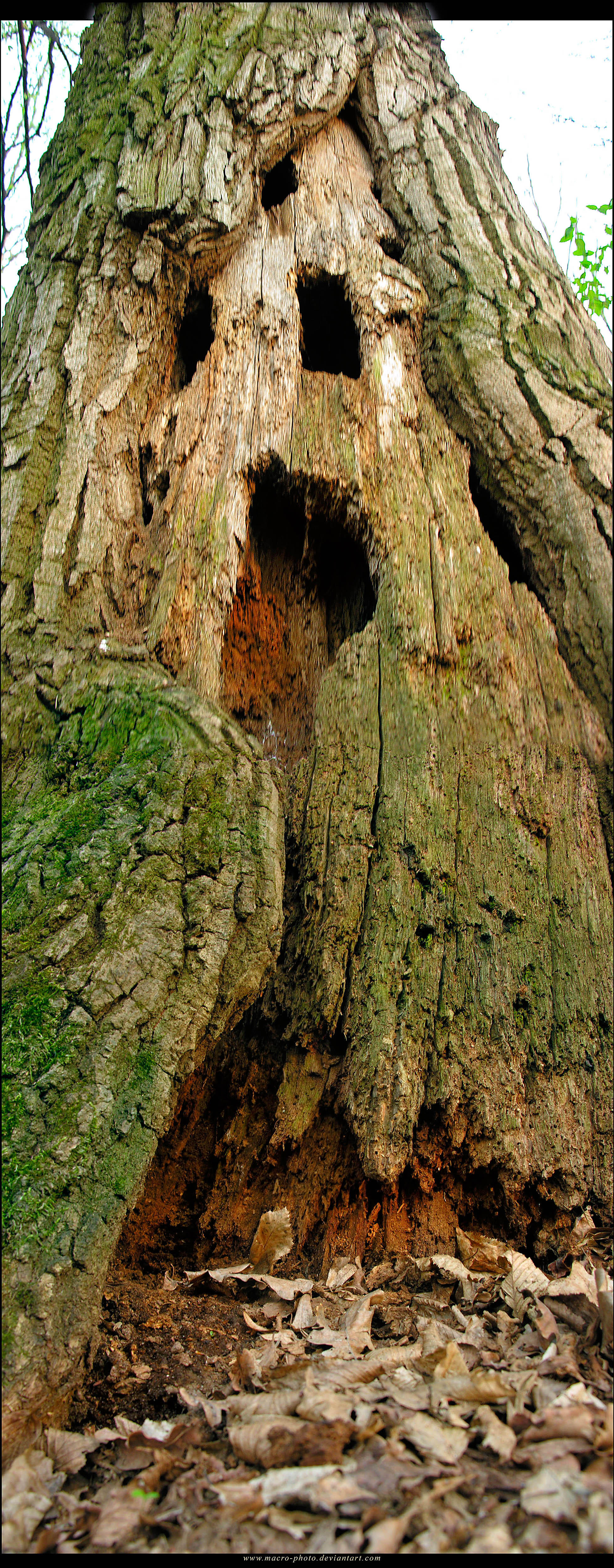 Mystic tree by macro-photo