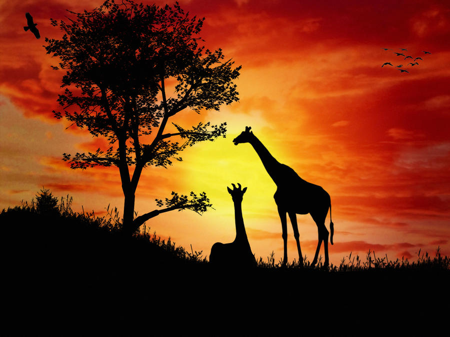 africa silhouette by magnuswinters