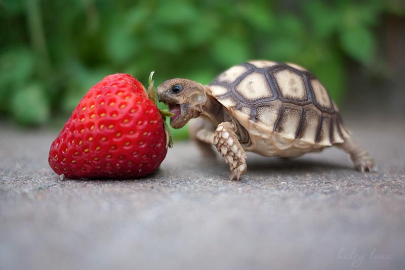 Kevin the Tortoise by haleyluna