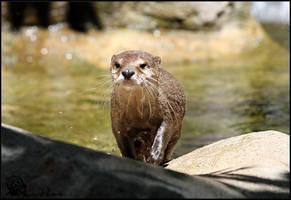 Otter by Mkatpro11