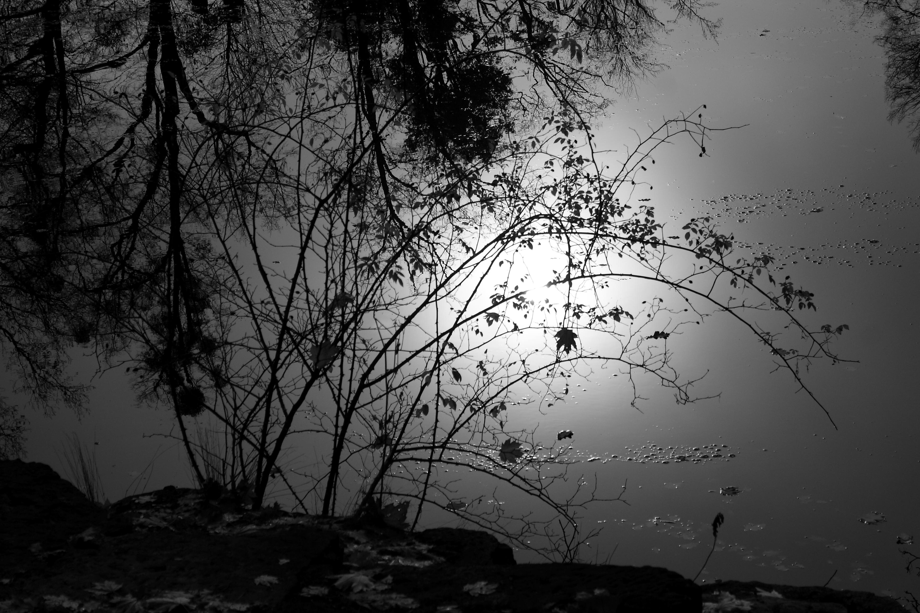Sun? by Criosdan