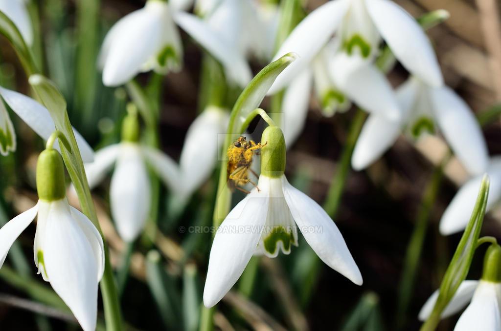 Little bee by Criosdan