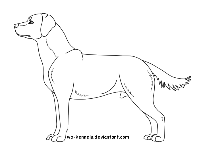 Free Labrador Retriever Lineart: Male by Chaolithe on