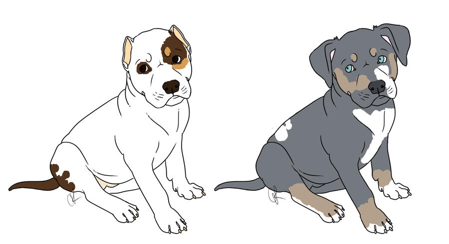 Pitbull Puppy Adoptables by bluegreatdane12 on DeviantArt