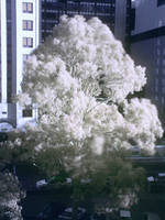 Infrared Tree by Zethyx