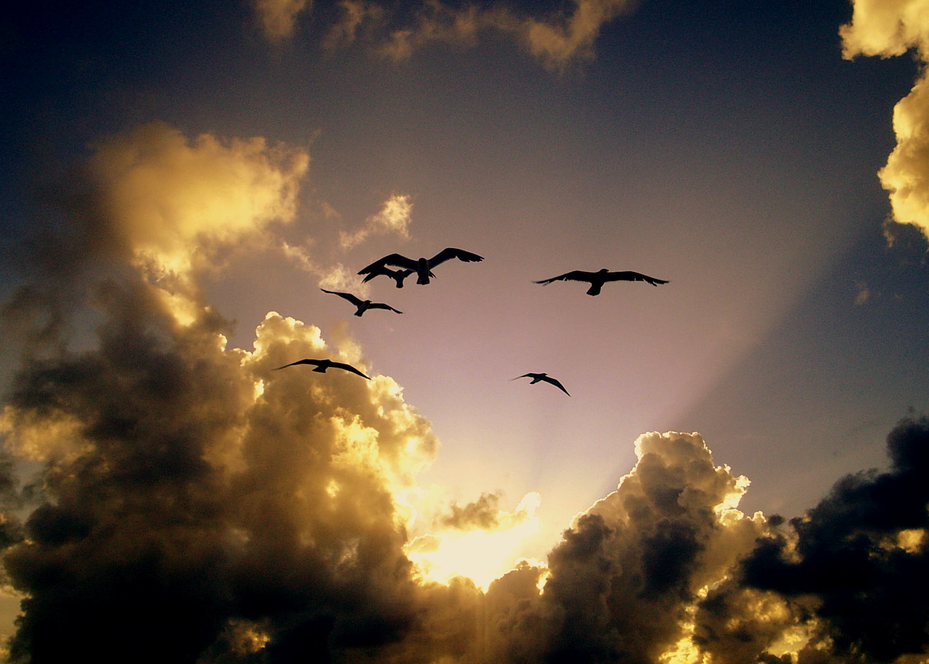 Sunset Birds 157185303