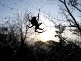 Dawn Spider
