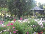 Botanical Gardens Toronto by seekingmysoul