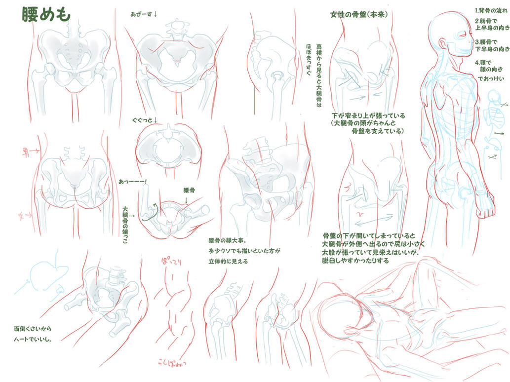 Anatomy Hip Male By Bardi3l On Deviantart