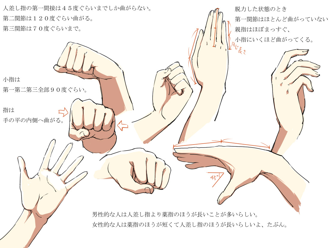 Hands Anatomy V2 By Bardi3l On Deviantart