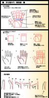 Hands Anatomy v3
