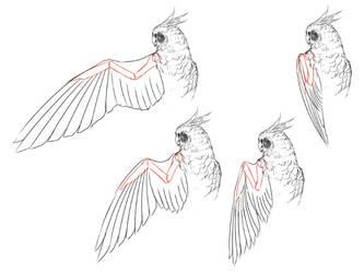 Anatomy Bird 02 by Bardi3l