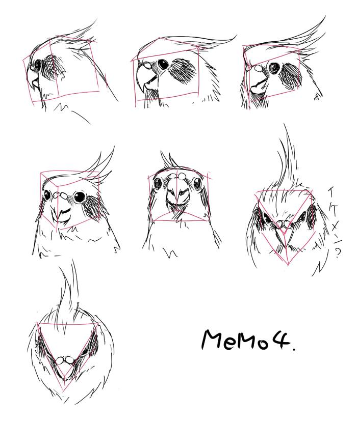 Anatomy Bird 03 by Bardi3l on DeviantArt