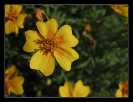 perfect little flower