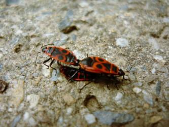bugs life by ScyterTom