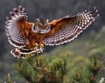 Tigerhawk