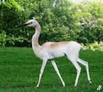 Dama egret