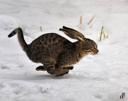 Long eared cat by Dwarf4r