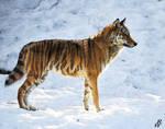 Canis tigris